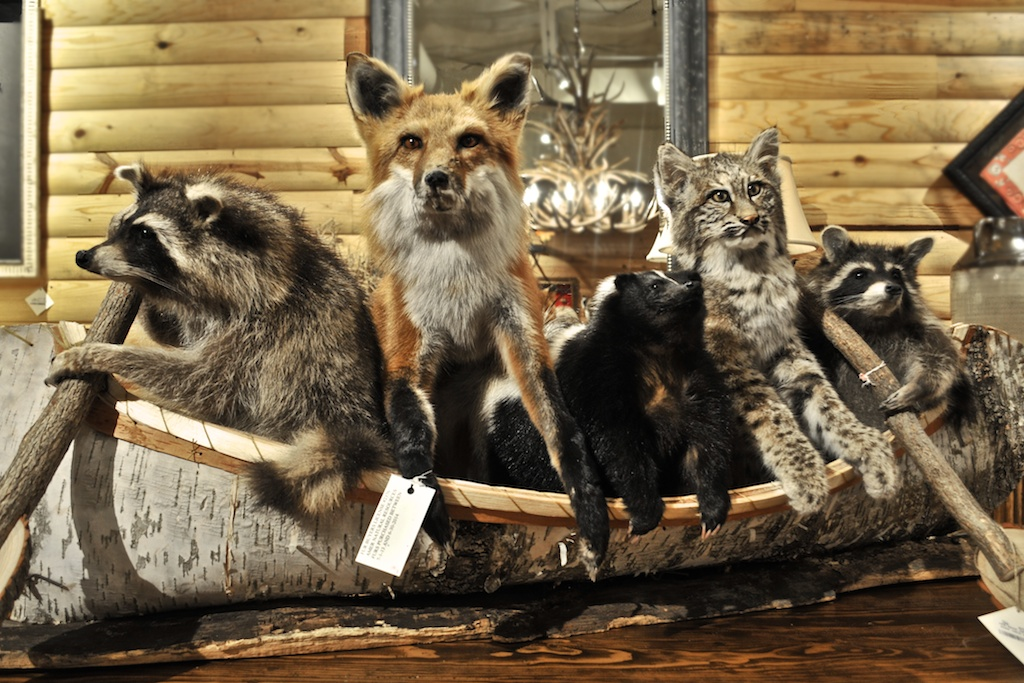 Taxidermy In Interior Decorating Read More On Ant 232 Ks Blog