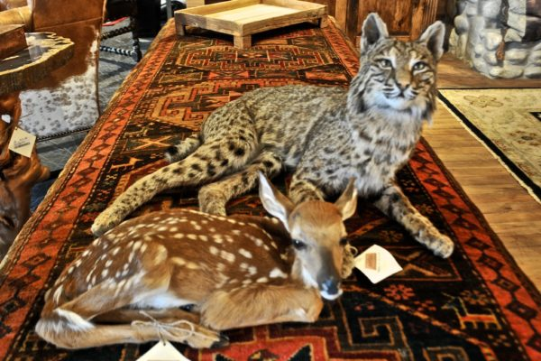 taxidermy, fawn and wildcat